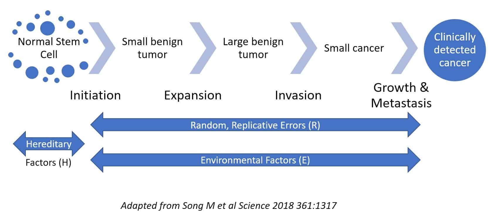 Singlera Blog An Early Mark heredity environment random causes of cancer